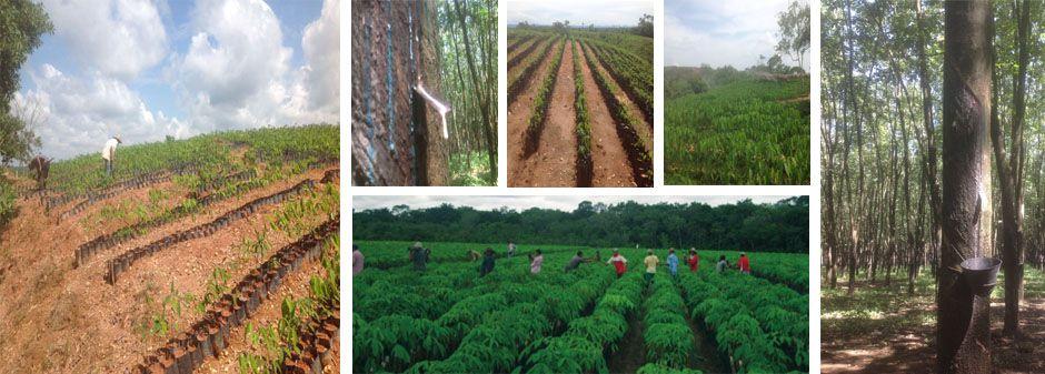 Nace Proforest: una apuesta sostenible