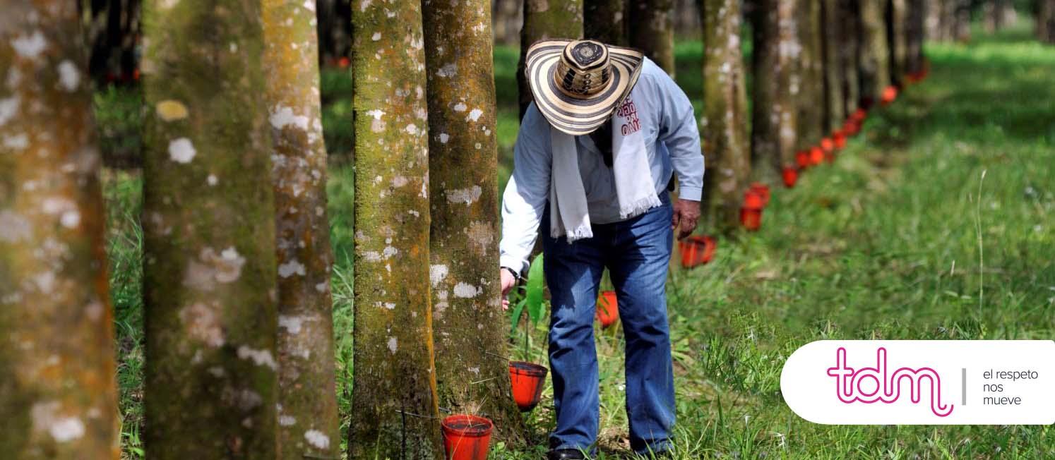 El problema de la deforestación en las pandemias.